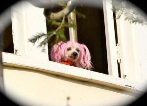 Pink Dog - Courtney Stodden