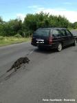 Masacrul cainilor pe Facebook Romania
