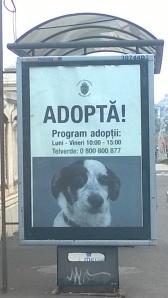 Program Adoptie