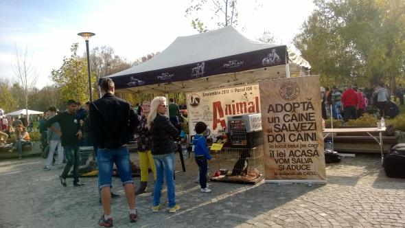 Animal Fest 2013