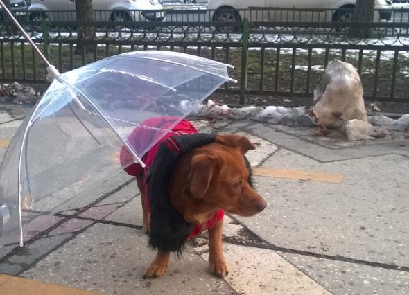 Umbrela pentru caine