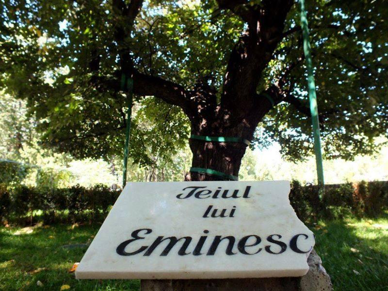 Imagini pentru poze teiul lui eminescu