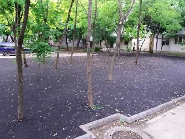 Copaci in bitum la galati