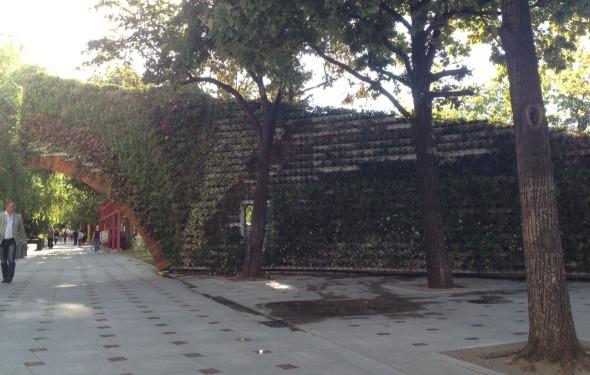 Zidul Rusinii Negoita