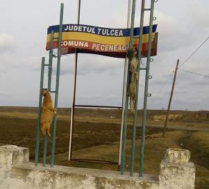 Peceneaga Tulcea