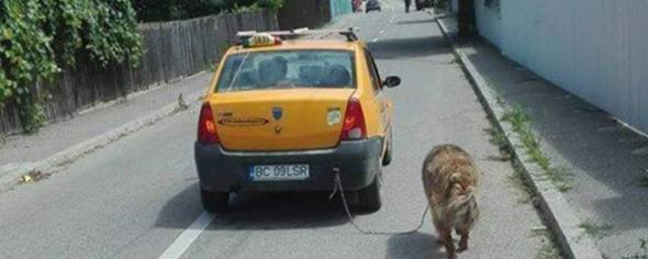 BC09LSR - Taxi LSR Bacau