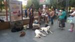 campanie-adresata-strict-iubitorilor-de-animale-6