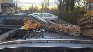 copac-prabust-peste-masina-sector-3-1