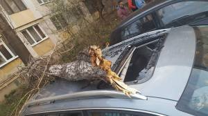 copac-prabust-peste-masina-sector-3-3