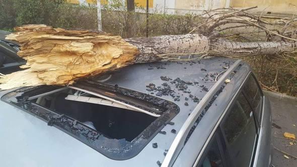 copac-prabust-peste-masina-sector-3-4