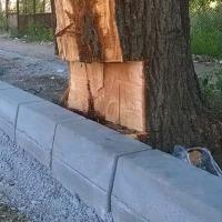 CORABIA: Natura a muncit câteva decenii la copacul acela. Dorel a rezolvat în zece minute!