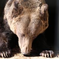 """MOȘ MARTIN: """"Traumele și suferințele animalelor sunt identice cu cele ale oamenilor!"""""""