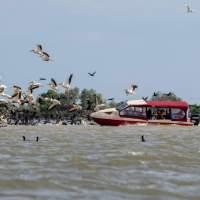 DELTA DUNĂRII: Excursie la ciufulit de pelicani și alte 3400 de specii