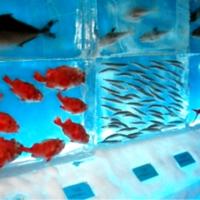 JAPONIA: Acvariul de Gheață, unic în lume, are 450 de exponate congelate și trebuie vizitat în maxim 5 minute!