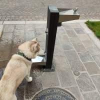 ORADEA: Cișmele 3 în 1, dreptul universal la apă. Păsări, oameni, animale!